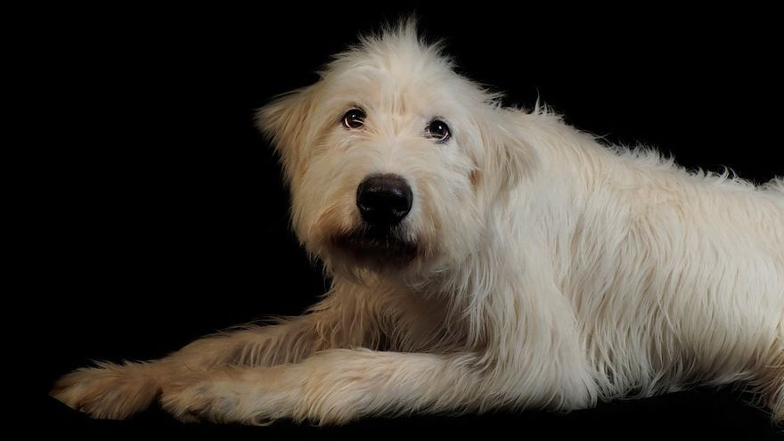 Weilers, perro rescatado por la asociación Anaa. Foto: Fotopets