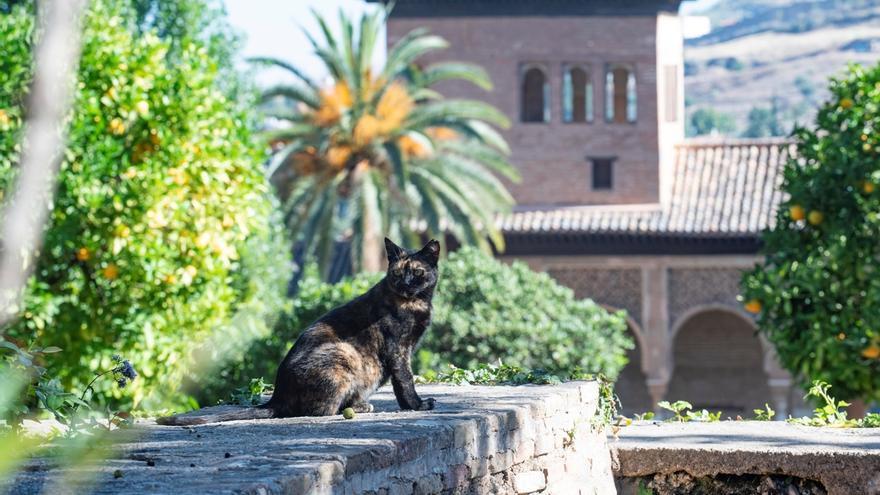"""Los otros """"leones"""" de la Alhambra"""
