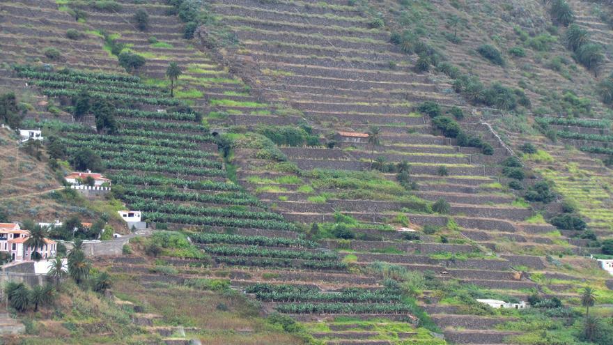 Bancales en el valle bajo de Hermigua