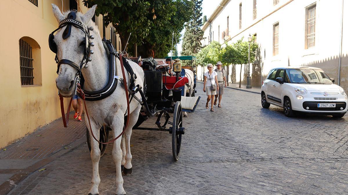 Un coche de caballos en Córdoba