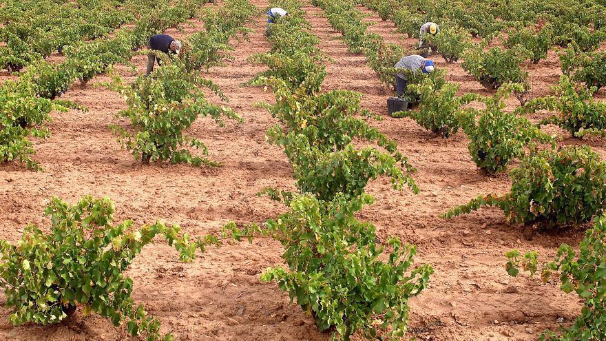 Vendimia en Castilla-La Mancha