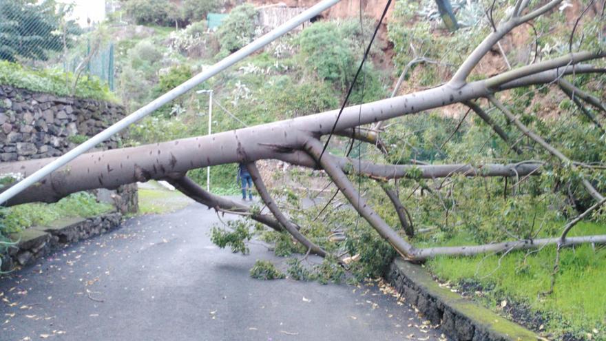 El árbol quedó atravesado en el camino del Barrando de Los Pájaros del barrio de Velhoco de Santa Cruz de La Palma.