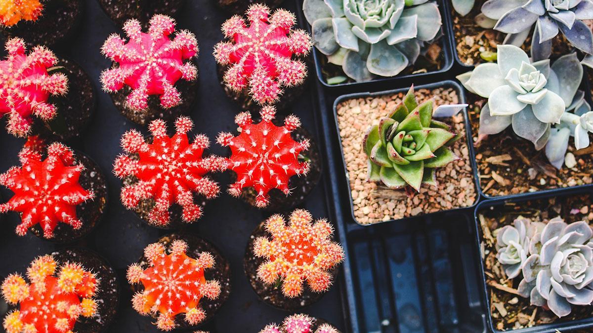 Una jornada permitirá intercambiar tus plantas por otras para favorecer la conservación de la flora cordobesa.