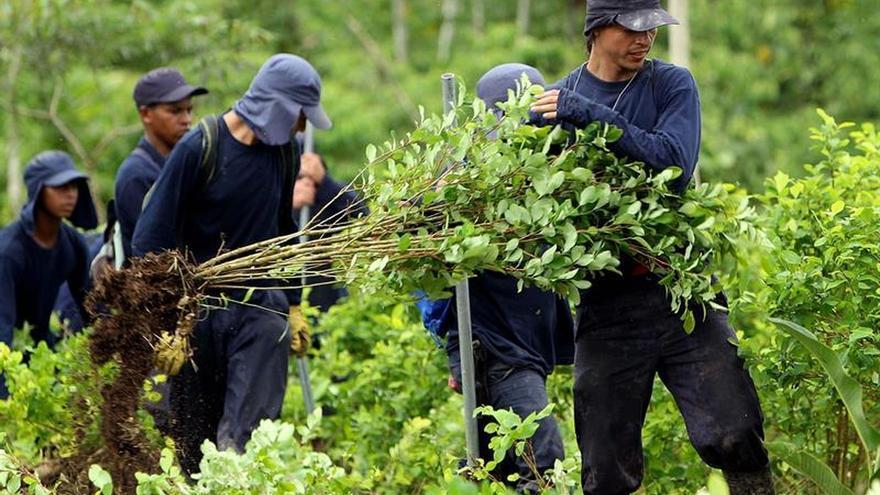 EE.UU. reporta que Colombia tiene sembradas 188.000 hectáreas de coca, cifra récord