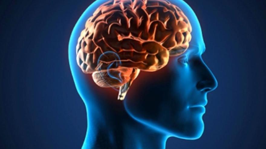 Imagen de un cerebro humano.