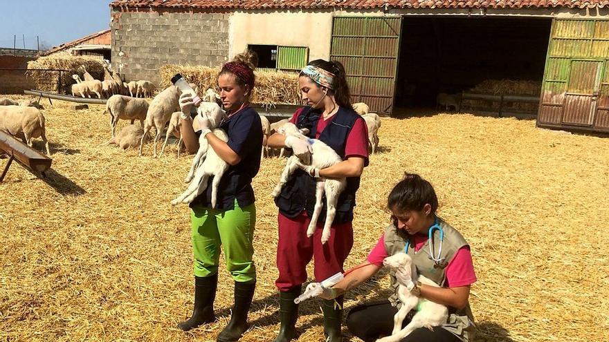 Jóvenes estudiantes hacen sus prácticas en pueblos de la provincia de Zaragoza.