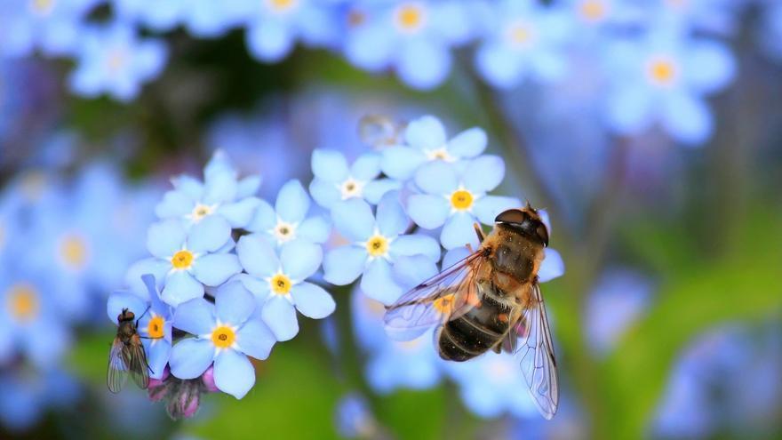 Abejas libando en las flores