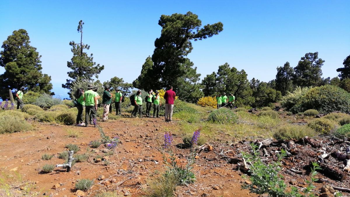 Miembros del Programa de Formación en Alternancia con el Empleo (PFAE) de Garantía Juvenil (GJ) Replantando Noroeste de La Palma, en la zona de monte público de Puntagorda, conocida como El Llano de las Ánimas, acompañados de técnicos y operarios del Parque Nacional de La Caldera de Taburiente.