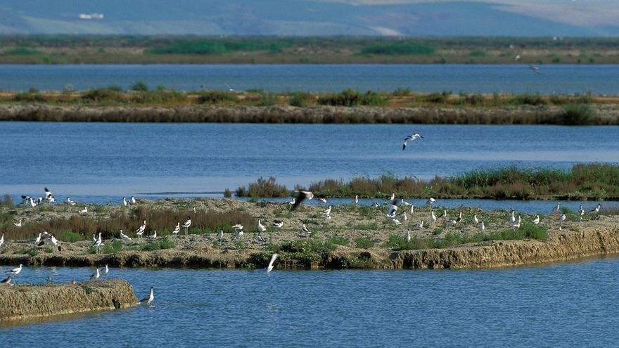 Expertos de la Universidad de Cádiz demuestran que la acuicultura alberga a más del 60% de las aves acuáticas de Doñana
