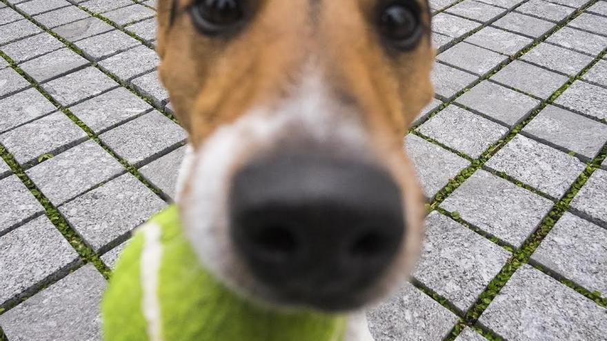Constituida la primera Federación de Defensa Animal de Cantabria, DEAN