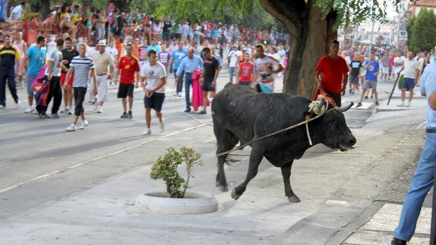Toro ensogado de Villaluenga de la Sagra (Toledo) / Youtube