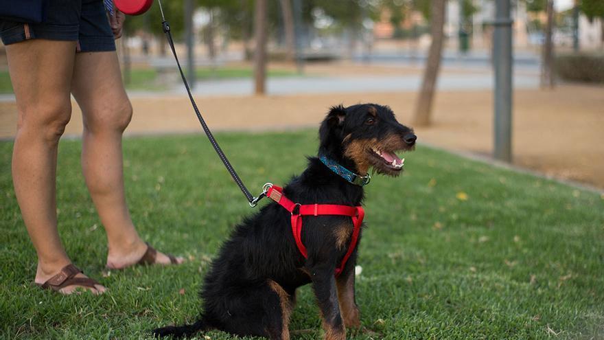 Cloe, la perra superviviente de la rehala que murió asfixiada.