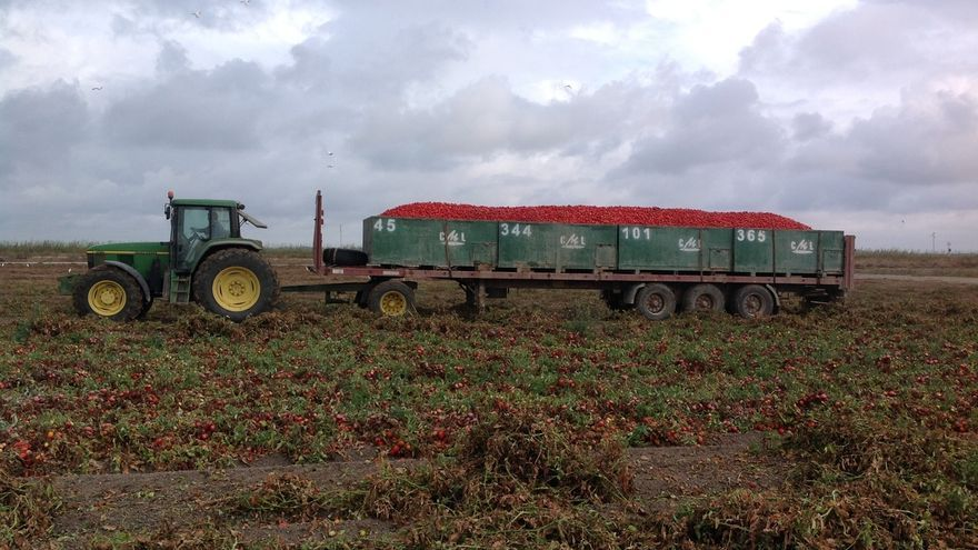 """UPA-A alerta de pérdidas """"muy importantes"""" para agricultores por la """"mala"""" planificación de algunas fábricas de tomate"""