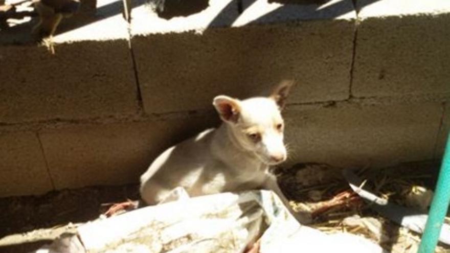 Uno de los animales en Uceda