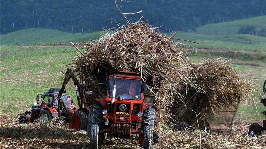 La cosecha azucarera cubana acumula un 53 por ciento de la producción del plan, pero con atrasos