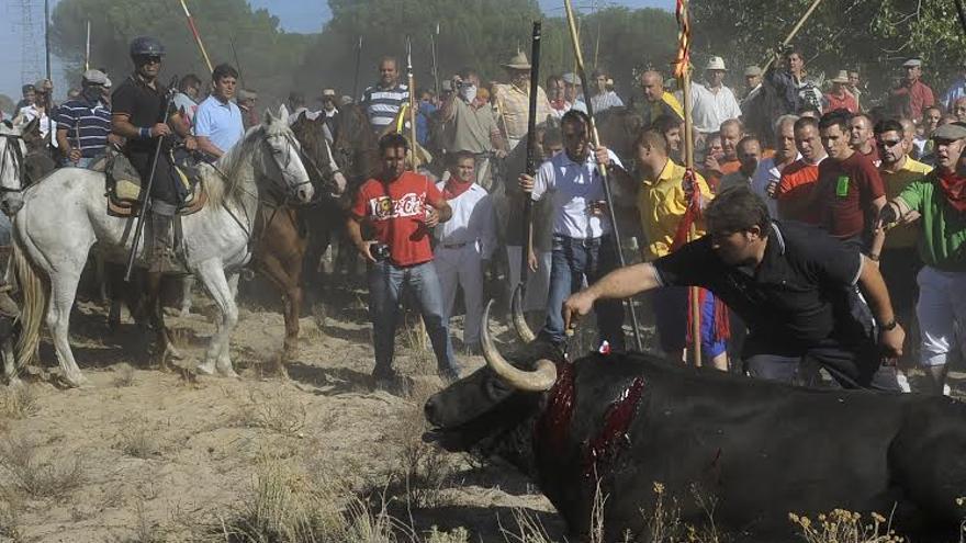 Tordesillas toro