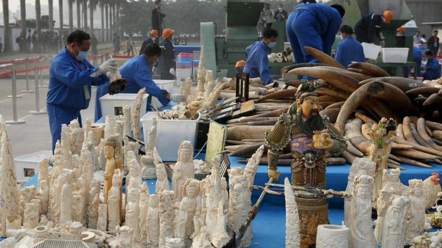 Descubren marfil y colmillos de elefante para su venta ilegal en Birmania