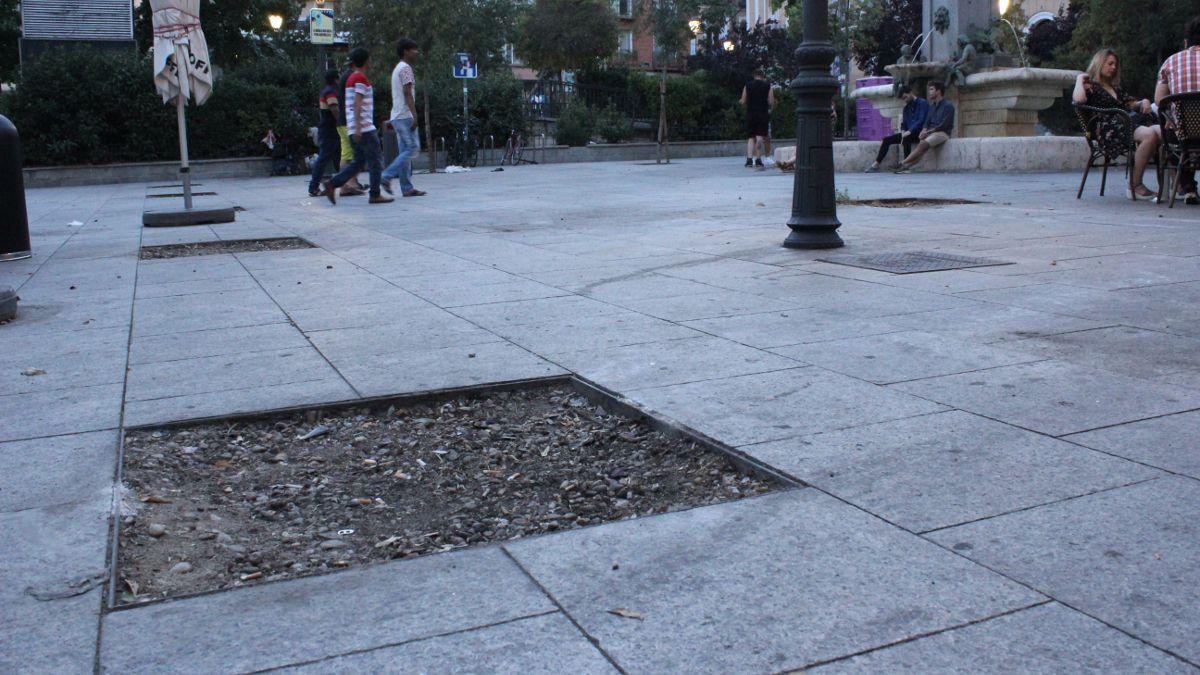 Alcorques vacíos en la Plaza de Pedro Zerolo | SOMOS CHUECA