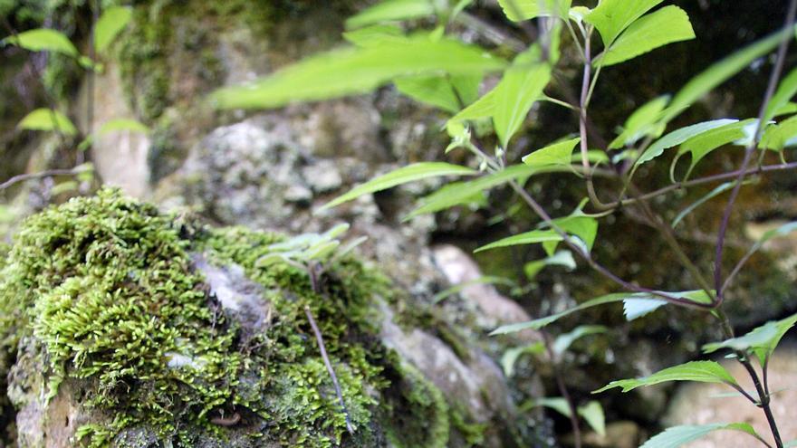 Detalle de la vegetación propia en esa zona de San Andrés y Sauces.