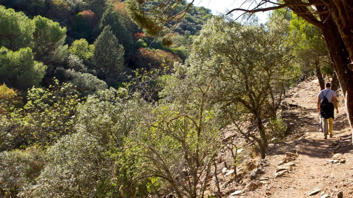 Camino al Castañar de Valdeazores, en el Parque Natural de Despeñaperros.