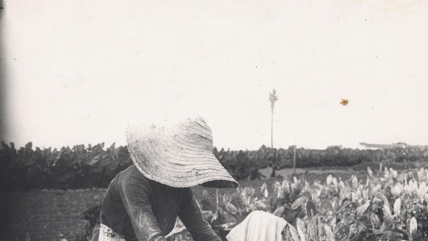 Fotos históricas de mujeres trabajadoras.(Cabildo de Gran Canaria)
