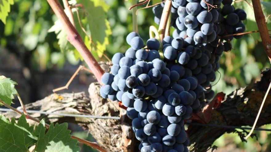 Ocho vinos Ribera del Duero pasados por barrica por menos de 10 euros