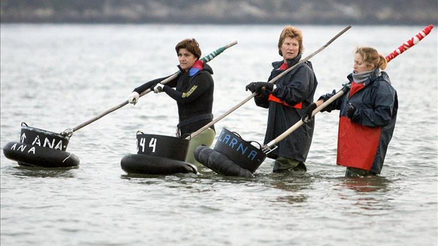 Los resultados del marisqueo han mejorado en Galicia un 15 por ciento