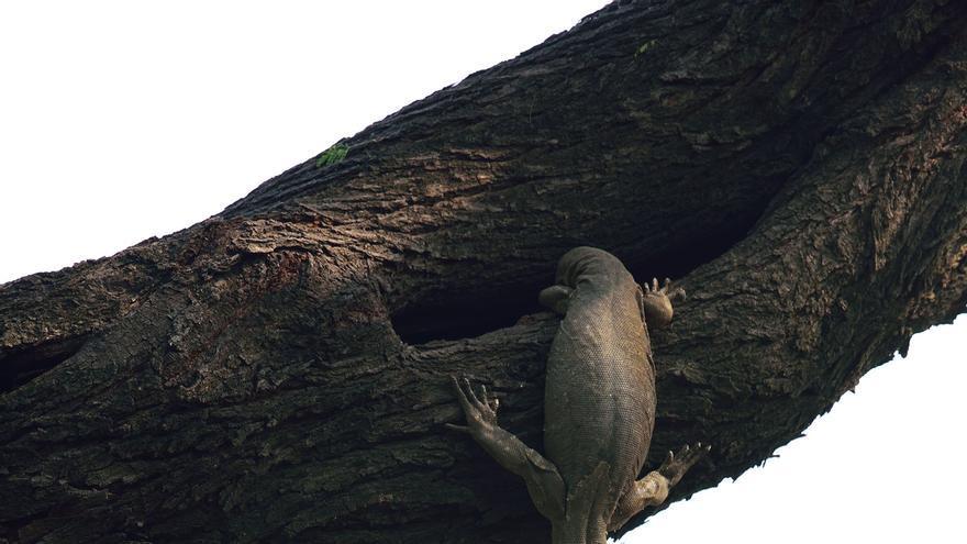 © Ganesh H. Shankar_Wildlife Photographer of the Year- Birds winner.jpg