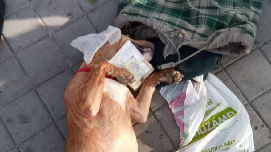 Perro fallecido en la calle
