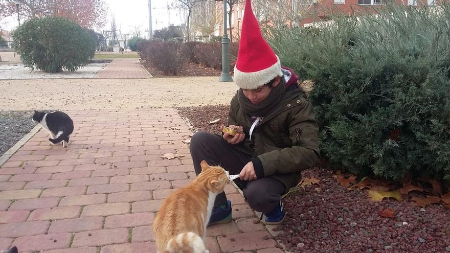 Miguel dando de comer a los gatos / Imagen cedida por su madre