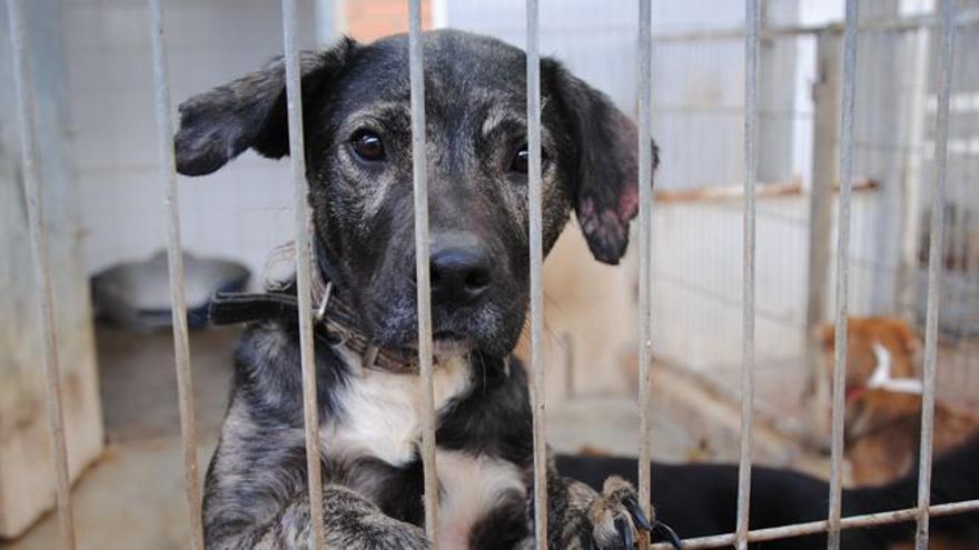 Cachorro abandonado en una perrera