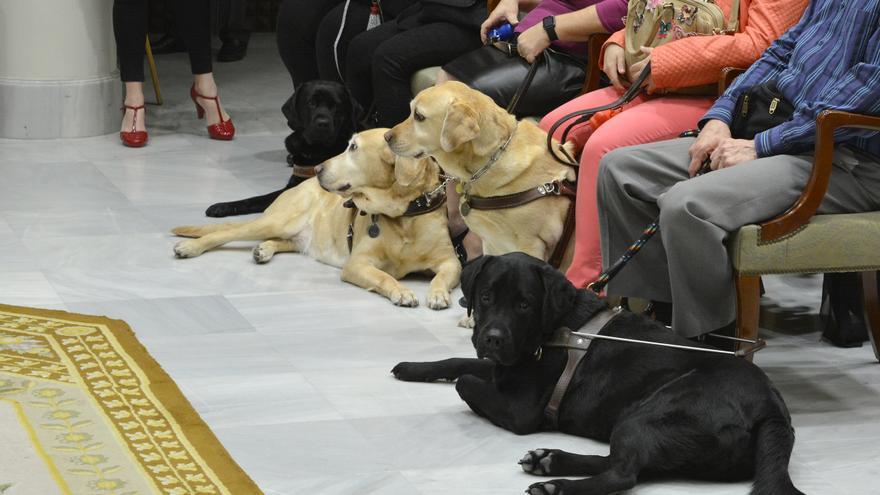 La Organización Nacional de Ciegos Españoles (ONCE) reclamó en el Parlamento de Canarias a una mejora de las condiciones para los discapacitados visuales de Canarias.