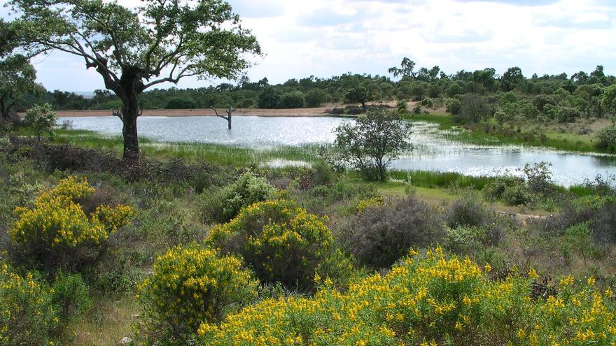 Charca ganadera, protegida por la Directiva Hábitat / Global Nature