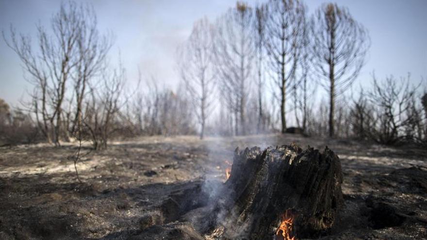 Denuncian en Italia a 15 bomberos pirómanos y estafadores