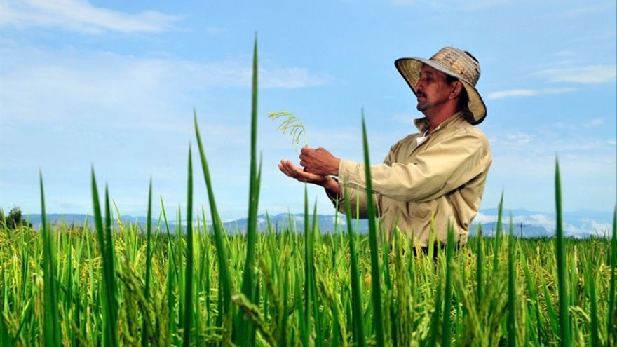 Foto: CIAT International Center for Tropical Agriculture