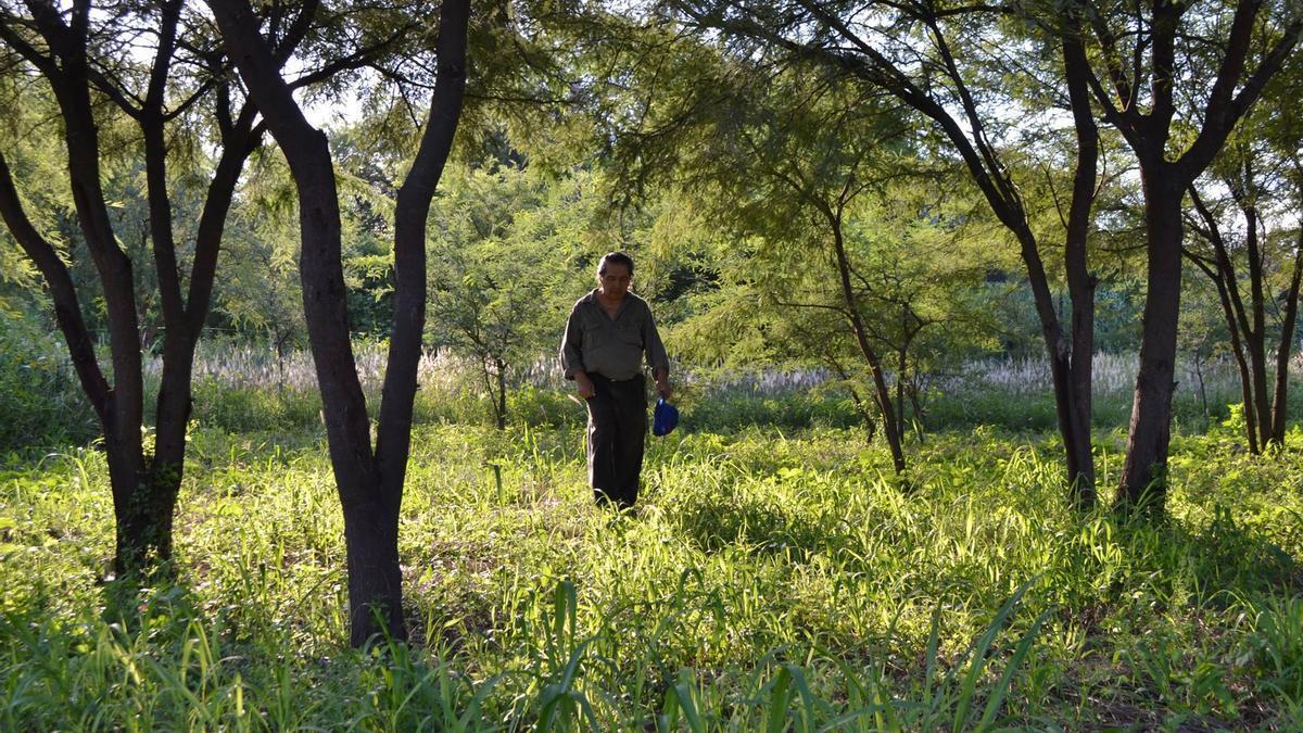 Mario Paz, como cada tarde, recorre la reserva hermanos del Ceibo en Santiago del Estero.