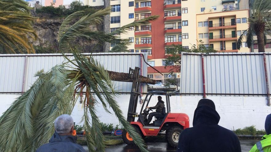 En la imagen, una palmera, tumbada por el viento, en la explanada del Puerto de Santa  Cruz de La palma utilizada como aparcamiento de vehículos.