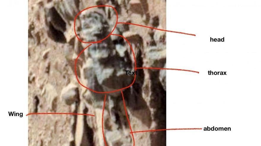 Roca de Marte con el supuesto insecto en ella