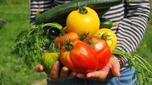 Verduras y hortalizas: ¿cuáles se pueden comer crudas y cuáles es mejor cocer?