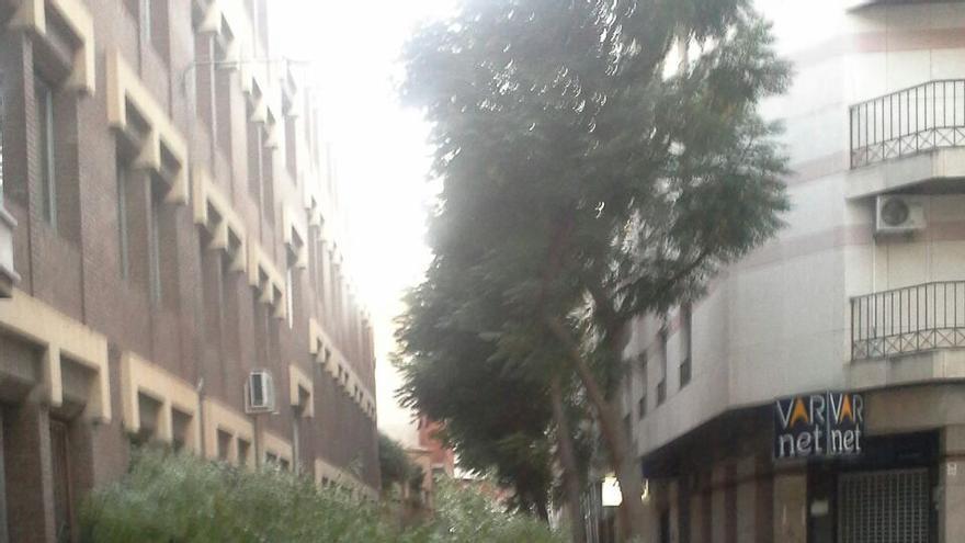 Arbol caido Ciudad Real. Agosto 2014