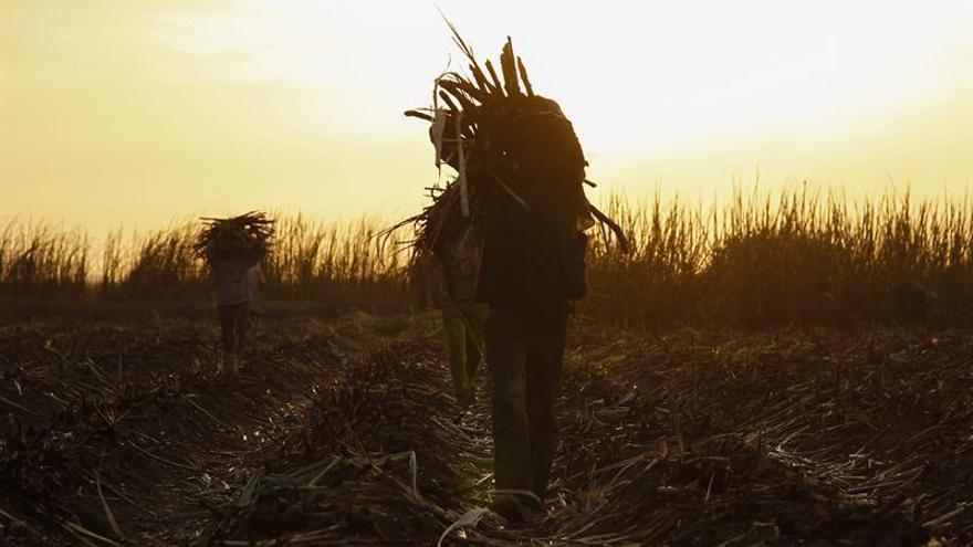 China inicia campaña contra el contrabando de azúcar ante distorsión mercado