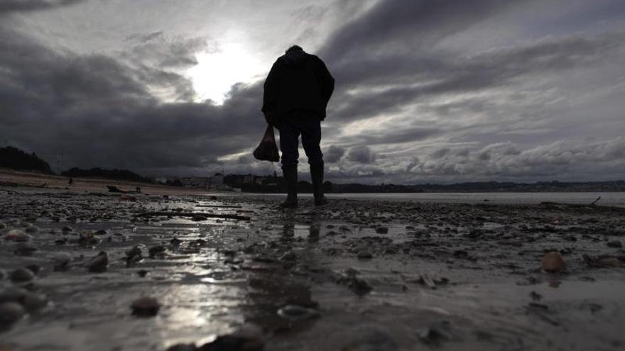 Toneladas de almejas y bivalvos aparecen en la playa coruñesa de Miño