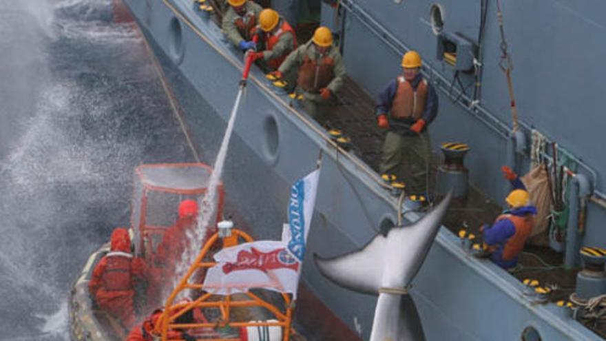 greenpeace ballenas