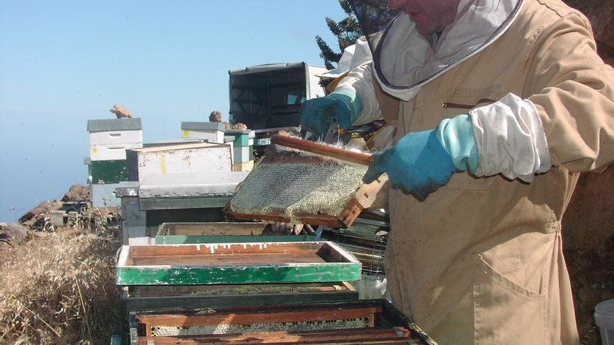 La apicultura prosigue su línea ascendente y alcanza un valor de producción de más de 4,1 millones de euros