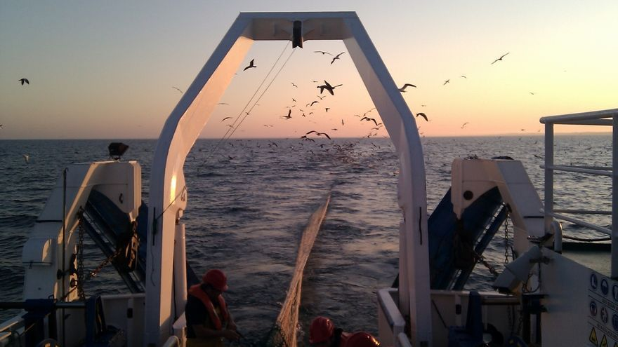 La campaña científica Juvena 2016 estima una biomasa de anchoa juvenil de unas 370.000 toneladas en el Golfo de Bizkaia