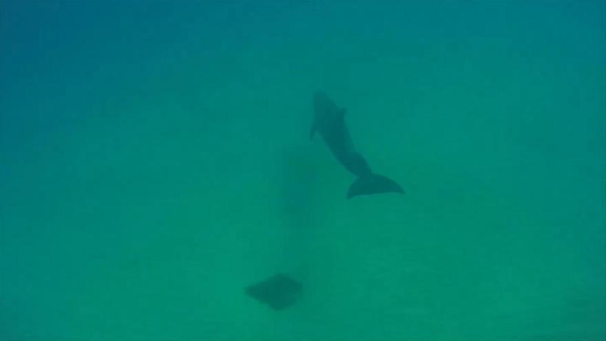 Dos majoreros ayudan a volver al mar a un delfín desorientado en una playa de Fuerteventura