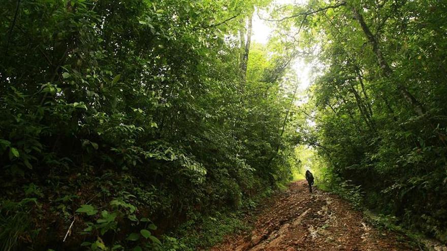 Una nueva base de datos para una mejor conservación del bosque seco ...