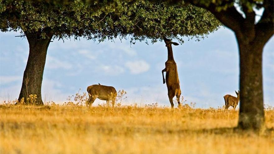 """Los dueños de cotos están """"satisfechos"""" con la enmienda el PP sobre parques nacionales. Greenpeace /Javier Sanchis / countrysessions.org"""