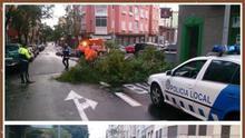 Desprendimientos y caídas de árboles en las dos capitales canarias