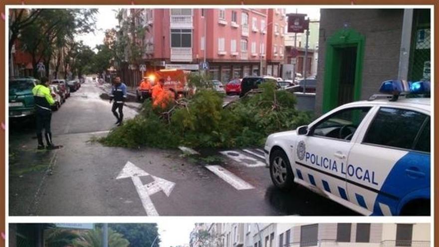 Caída de árboles en Santa Cruz de Tenerife. (EUROPA PRESS)